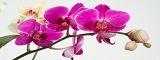 Логотип Орхидея